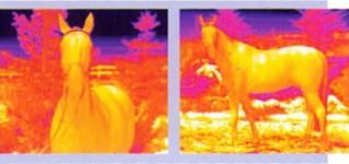 Термографические приборы для обследования состояния лошадей
